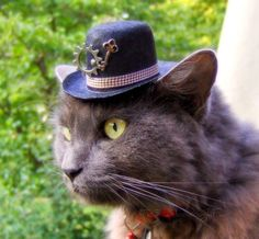 This cat in his little steampunk hat is seriously cute. Description from lieselschwarz.com. I searched for this on bing.com/images