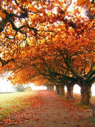 nature There is something so beautiful about the colours that come with autumn, and walking through the leaves! Seasons Of The Year, Best Seasons, Beautiful World, Beautiful Places, Beautiful Pictures, Trees Beautiful, Image Nature, Belle Photo, Fall Halloween