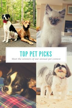 Meet the winners of our 2017 Pet Photo Contest  Adorable dogs, a cat and even an amphibian made the top picks in this year's pet photo contest. We had so many wonderful entries, it was tough to narrow it down.   Chesapeake Family Life Magazine, Pets, Maryland