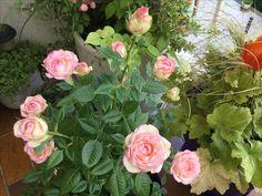 Floral Wreath, Wreaths, Plants, Home Decor, Gardens, Small City Garden, Floral Crown, Decoration Home, Door Wreaths