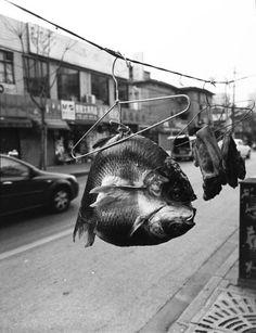 birdhead photography - shanghai