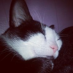@imma.gat #Cute #cat #sleeping