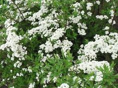 The Best Shrubs to Plant in a Wet Area thumbnail