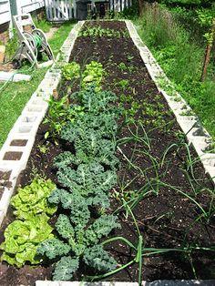 Raised Bed concrete block Garden looking good!