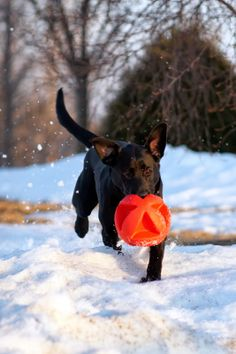 Tips for getting active with your pet during winter weather