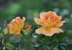 Plantas con flor más populares