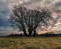 Went to Lippeaue bei Damm u. Bricht this morning to check some new spots. Saw this fantastic scene... so click & save  . Web: https://d4bk.de . . . #d4bk #voerde #hünxe #landscapephotography #landschaftsfotografie #tutorial #winter #travel #reise #adventure #abenteuer #wanderlust #landscapes #landschaften #picoftheday #fotodestages #amazing #erstaunlich #earth #erde #explorer #photography #fotografie #season #2018 #march #märz #tree #dramatic #clouds