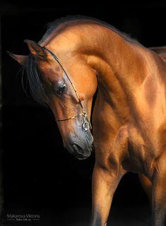 Cavalos bonitos por Vikarus - Amo Imagens - Amo Imagens