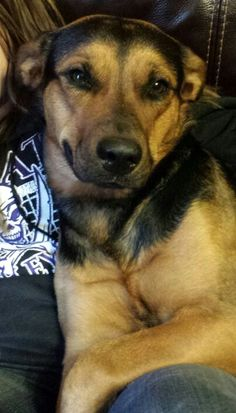 just cause my rottweiler german shepherd mix loves to smile:)