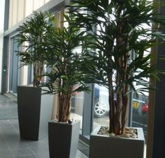 office plants pot plants christmas trees and artificial plants for your office nature at work office plants rents and maintains office plants in and amazing office plants