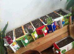 Milk Carton / Juice Carton Planter boxes to start your garden Container Gardening, Gardening Tips, Indoor Gardening, Sustainable Gardening, Indoor Herbs, Urban Gardening, Container Plants, Organic Gardening, Indoor Plants