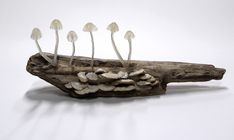These Eco Friendly Mushrooms Turn Your Home Into A Magical Forest! | Spirit Science