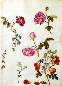 """From Alexander Marshal's (c.1620-1682) Floregium comes this page full of roses."" 