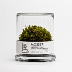 """The Mosser is a small glass terrarium filled with a simple round moss ball. The Mosser comes with a glass mister bottle used to feed your plant. They are very easy to care for and only need to be sprayed once every two weeks with filtered water."""