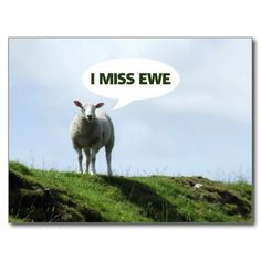 I Miss You Funny Sheep Ewe Postcard