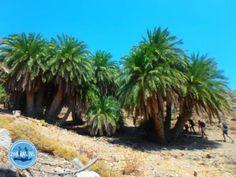Rundreise Kreta Griechenland Crete, Outdoor, Plants, Garden, Iceland, Car Rental, Crete Holiday, Travel Alone, Tours
