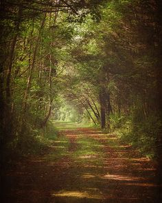 Landscape Photograph, Dreamy Forest Trail, Fine Art Photography Print, Trail, Path, Green, Brown, Woodland Wall Art on Etsy, $15.00