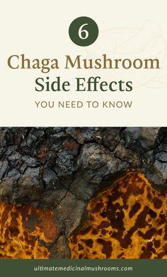 Mushroom Guide, Mushroom Tea, Mushroom Recipes, Health Benefits Of Mushrooms, Mushroom Benefits, Chaga Tea Benefits, Growing Mushrooms, Anti Inflammatory Recipes, Healing Herbs