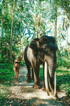 Elephant sanctuary in Bali. Elephant sanctuary in Bali Photo by Bali Travel Guide, Asia Travel, Thailand Travel, Wanderlust Travel, Thailand Vacation, Bali Trip, Phuket Thailand, Philippines Travel, Spain Travel