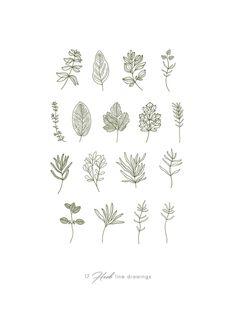 Watercolor Herbs clipart green line art & botanical Herbs Illustration, Botanical Illustration, Watercolor Illustration, Line Art Flowers, Flower Art, Branding, Sketch Inspiration, Line Tattoos, Line Drawing