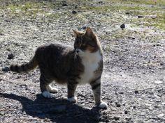 Rikki's Refuge Cats #9   www.rikkisrefuge.org