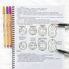 Likes, 259 Comments - 👩🏼⚕️ therese Biology Drawing, Study Biology, Biology Lessons, Life Hacks For School, School Study Tips, School Tips, College Notes, School Notes, College Life