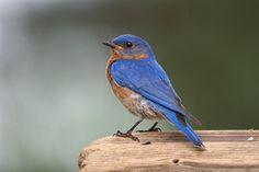 LAVENDER BIRDS | Birds In My Yard Week photo