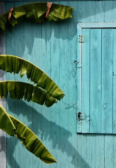 Blue house and banana tree