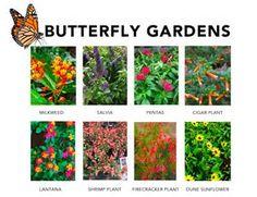 8 Best Butterfly Gardens images | Landscape design ...
