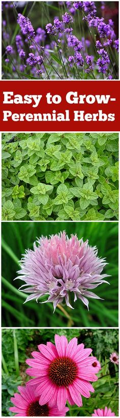 Easy to Grow- Perennial Herbs