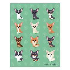Chihuahuas are excellent pets, but a dog owner must bear in mind that the Chihuahua lifespan is shorter compared to human lifespan. That said it is important that the owner to make sure that his/her Chihuahua has a long and happy life. Chihuahua Puppies, Teacup Chihuahua, Cute Puppies, Cute Dogs, American Dog, Little Dogs, Dog Art, Dog Love, Fur Babies