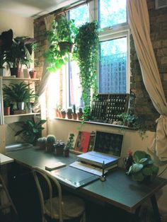 Beautiful collection of indoor plants surround a work desk. Air purifying plants, hanging vines to succulents and cacti on the desk.