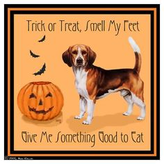 Funny, I think my Beagle asks this everyday of the year, lol