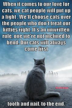 When it comes to our love for cats, we cat people will put up a fight. We'll choose cats over the people who don't treat our kitties right. It's an unwritten rule, one we're not inclined to bend. Our cats will always come first.tooth & nail to the end. Crazy Cat Lady, Crazy Cats, I Love Cats, Cool Cats, Neko, Jiff Pom, Amor Animal, Cat Quotes, Quotes About Cats