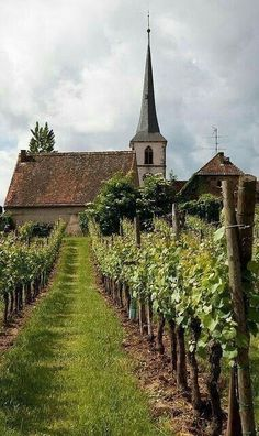 Beautiful World, Beautiful Places, Haute Marne, Belle France, Wine Vineyards, French Countryside, France Travel, Wine Country, Places To See