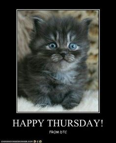 The post Thursday Memes 38 appeared first on Fit for Fun. Thursday Greetings, Happy Thursday Quotes, Happy Quotes, Foster Cat, Online Friends, Mean People, Cat Quotes, Happy Day, Cute Cats