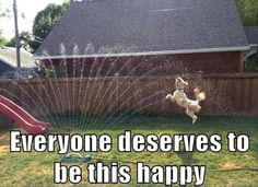 everyone deserves to be this happy - Google Search