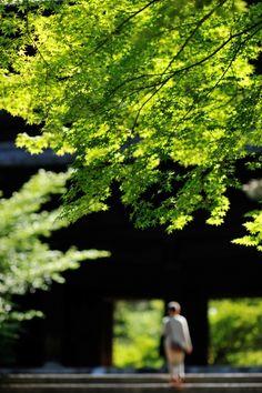 Nanzen-ji Temple, Kyoto, Japan 新緑の山門へ #緑 #Green