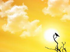 https://www.fondosypantallas.com/wp-content/uploads/2009/10/sunsetwatch_1600x12001.jpg