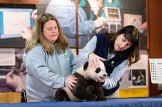 In this photo taken Dec. 14, 2015, animal keeper Nicole MacCorkle, left, and biologist Laurie Thompson, right, attempt to look at the teeth of Bei Bei, the N...