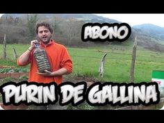 Como Hacer Purin De Gallinaza    Abono Organico Nitrogeno    La Huertina De Toni - YouTube
