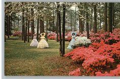 Azalea Trail 2013 | Postcard..Azalea Trail..Southern Belles-Mobile,Alabama