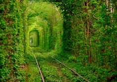 green railroad tunnel