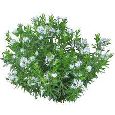 11 best photoshop images flower plants flowering plants. Black Bedroom Furniture Sets. Home Design Ideas