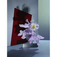 """Editorial """"Orchids""""."""