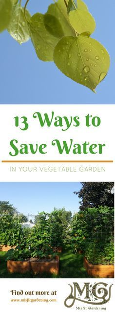 Find out how to save water in your vegetable garden with these 13 low water gardening methods. Click through to find out more or pin it and save for later.
