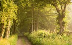 tree lined country lane...