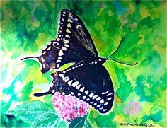 Water colour of a Butterfly my husband Walter Beitlberger photographed.