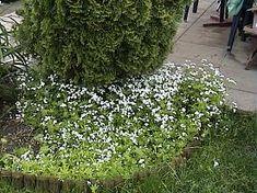 gartenbasteleien zum nachmachen gesucht - seite 1, Garten und erstellen