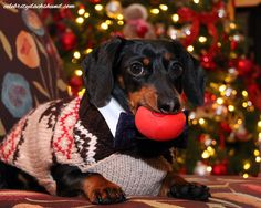 Crusoe Dachshund Christmas Sweater